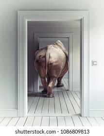 Rhino in the room. Photo  combination