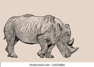 Rhino sketch line with JPEG file