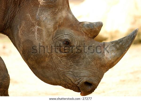 Rhino taronga zoo sydney