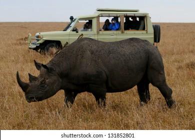 Rhino and Tourist Truck Kenya