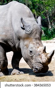 The rhino with two snout nose-horned in zoo.