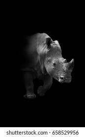 rhino walking out of the dark and into the light, africa wildlife wallpaper