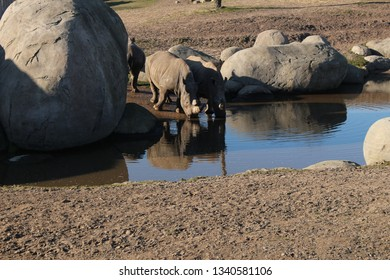 Rhino at the water