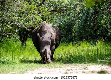 Rhino in the Wilderness of Africa