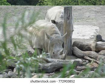 a rhino in zoo