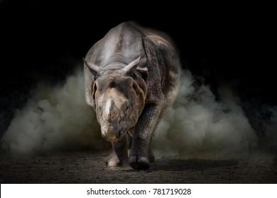 Rhinoceros animal black background