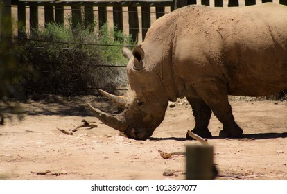 Rhinoceros conservation wildlife
