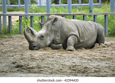 Rhinoceros on sand in the zoo