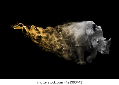 The rhinoceros is one of the big five animals you must see in africa, animal kingdom collection, African wildlife