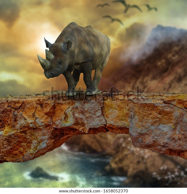 Rhinoceros is standing on a rock