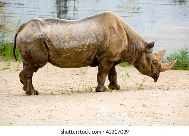 Rhinoceros in  Tallinn zoo, Estonia