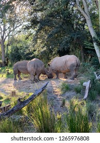 Rhinoceros is their natural habitat gather to eat and graze.