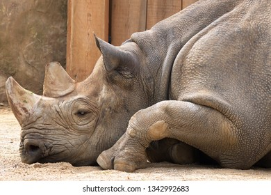 a rhinoceros in a zoo