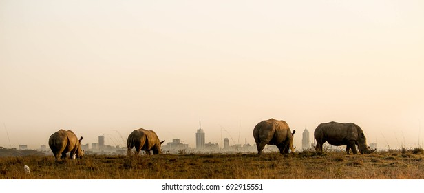 rhinos and the nairobi city skyline