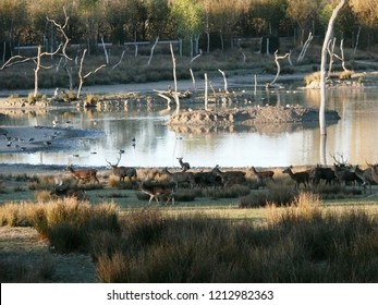 Rhodes, Moselle/France - 10/12/2018 : Deer and fallow deer at the animal park of Sainte Croix in Moselle.