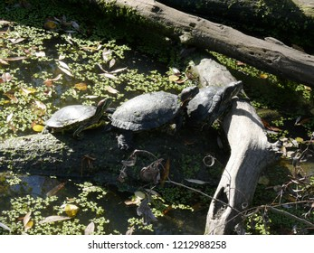 Rhodes, Moselle/France - 10/12/2018 : Three aquatic turtles at the animal park of Sainte Croix in Moselle.