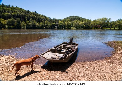 A Rhodesian Ridgeback dog curiously looking at a boat tied up to the shoreline of the Allegheny river in Warren County, Pennsylvania, USA