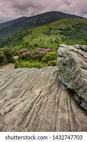 Rhododendron bloom along the Appalachian Trail as it leaves a rock outcropping on Jane Bald for Round Bald with Roan Mountain in the distance