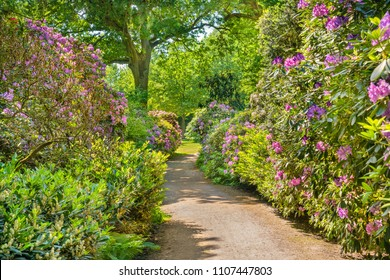 Rhododendron in blossom in the City Park (German: Stadtpark) in Hamburg, Germany. The Hamburg City Park is 148 hectares (366 acres) large and located in the Hamburg district of Winterhude.