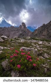 Rhododendron blossom under the majestic peak of Torrione Comici, in the Friulian Dolomites,  Italian Alps. Majestic alpine landscape. Poster, background or wallpaper.