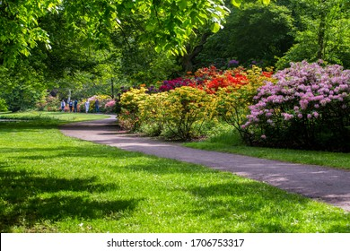 Rhododendron bushes alley near japanese gardenin the Hague - amazing sunny day at May
