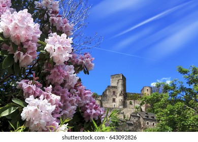 rhododendrons and Belcastel village