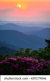 The rhododendrons in full bloom on a warm spring evening during an amazing sunset at the Roan highlands in the Blue Ridge Mountains