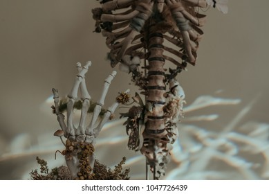 Rib Cage and Hand Bones with Dried Flowers and Moss