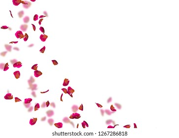 Ribbed red petals fly in a circle. The center free space for Your photos or text. Isolated white background. On a blurred background of rose petals
