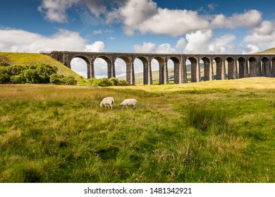 Ribble Valley Viaduct, North Yorks, UK - Circa August 2019: Famous Ribble Valley viaduct railway crossing seen in all its glory. Set in the heart of the Dales, a pair of Dales Sheep are seen grazing.