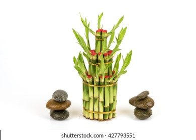 Ribbon dracaena, Lucky bamboo, Belgian evergreen, Ribbon plant (Dracaena sanderiana).in plant breeding. To worship The notion that fortune. Bring in wealth.