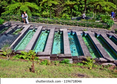 RIBEIRO FRIO, MADEIRA, PORTUGAL - SEPTEMBER 02, 2018: Tourists  visit a trout farm. Don't feed the fish whatever you do – it's strictly forbidden.