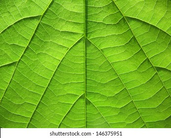 Ribs and veins of green leaf in back light, textured background