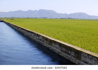 Rice cereal green fields in Spain and blue irrigation canal