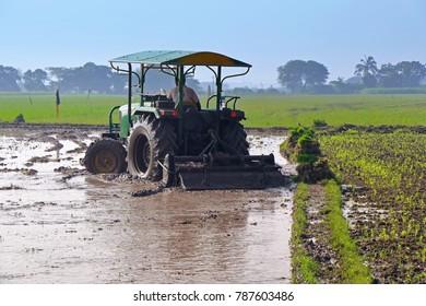 Rice Cultivation - Man with Tractor , Cheannai,Tamilnadu ,India.10-12-2017