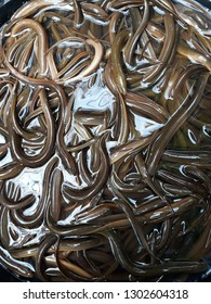 Rice eel, moa, or protected (Monopterus albus) is a type of fish belonging to the Synbranchidae (eel) tribe, order Synbranchiiformes, which has economic and ecological values. This fish can be eaten.