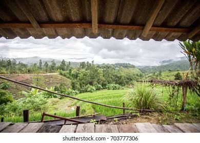Rice farm home stay