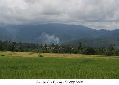 Rice farm with the mountain in background
