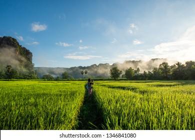 Rice Farm at Noen Maprang , Phitsanulok Province in Thailand