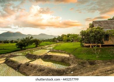 Rice farm in Pai district, Mae Hong Son Province, Thailand
