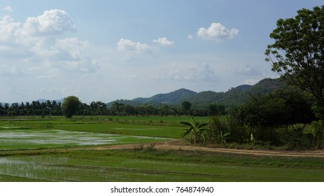 The rice farming of Thailand so beautiful