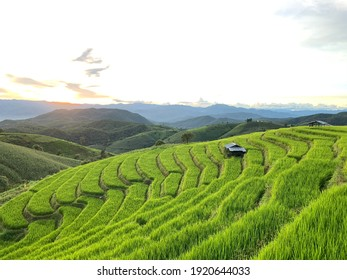 A rice field after sunset in Thailand