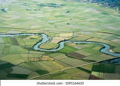 Rice field in Bac Son valley in Vietnam