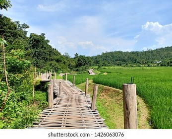 rice field and bamboo bridge in pai