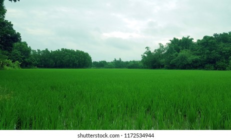 Gazipur Images, Stock Photos & Vectors | Shutterstock