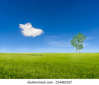 Rice field and blue sky.