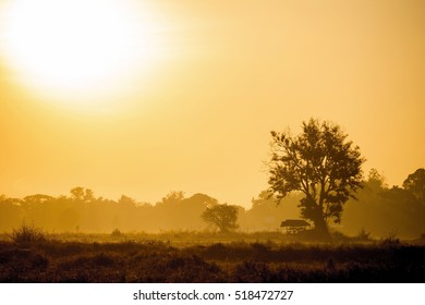 rice field with cottage and sunrise