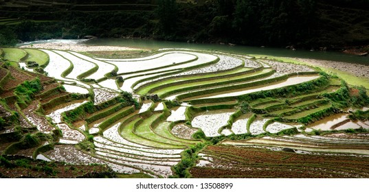 Rice field curves