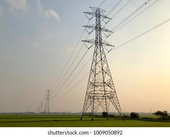 Rice field with electric poles