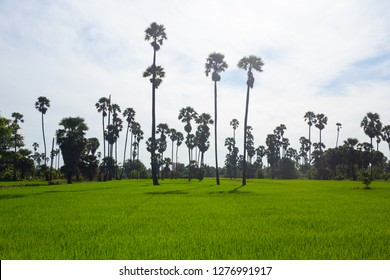 Rice Field of Farmer  in the morning of Thailand